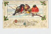 PPC POSTCARD CHRISTMAS GREETINGS BIRDS ON BRANCH HOLLY GOLD EMBOSSED STECHER LIT