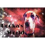 Pookas World