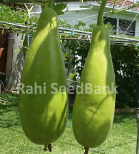 Bottle Gourd Maya - One of the Most Tasty & Prolific Asian Gourd - 5 Seeds!!!