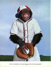 1 Vintage Art Photo Page from Chimp Chat Book 1960 Monkey outfit Baseball player