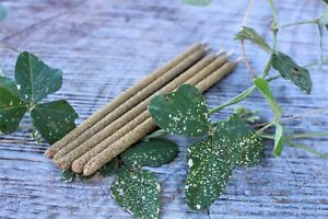 Palo Santo Premium Handrolled Incense Sticks - Cleanse