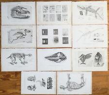 Orbigny: Lot of 11 Prints Fossil Skeleton etc. (W) - 1849