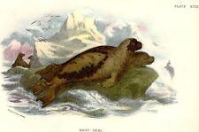 Sharpe's Cat Handbook - Chromo -1890- HARP SEAL