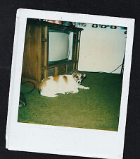 Vintage Polaroid Photograph Adorable Puppy Dog Laying By Retro Television Set TV