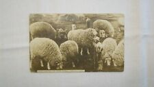 """EXAGGERATION POSTCARD """" SPECIMENS OF OUR WOOL PRODUCERS """" GIANT SHEEP 1910  POST"""