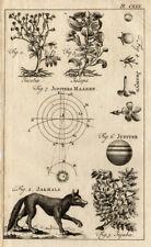 Antique Print-JASMINE-JUPITER-JACKAL-RAGWORT-Buys-1770