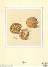 Kurt Wirth Art    The Walnut   Featured on SwissAir 1980 Menu