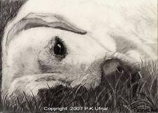 Pencil Dog Art,Yellow Labrador Retriever By PK Ufnal