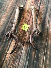 Real wild turkey feet Pair taxidermy repair animal mount Witchcraft Voodoo Spell