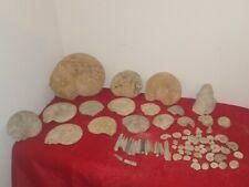 lot ammonites et autres fossiles