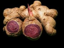 100 grams Kaempferia parviflora, Thai Black Ginger fresh root (Bulbs), Herbs