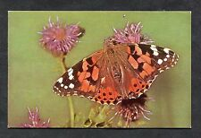 C1970's View of a Painted Lady Butterfly.