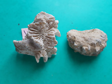 Coquillage fossille