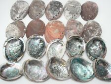 "20 PCS ONE SIDE POLISHED PINK ABALONE SEA SHELL 6"" - 6 1/2"" #7127"
