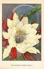 "1926 Vintage GARDEN FLOWER ""NIGHT BLOOMING CEREUS"" GORGEOUS COLOR Art Lithograph"