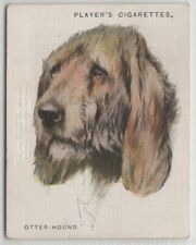 Otterhound Otter-Hound Dog Canine Pet 1920s Ad Trade Card