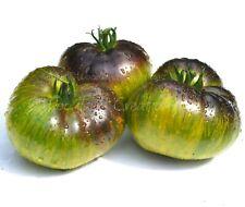 Xanadu Green Goddess Tomato Seeds New Rare Organic Vegetable Heirloom Free Ship