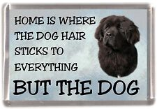 "Newfoundland Dog Fridge Magnet ""Home is Where"" Design by Starprint"