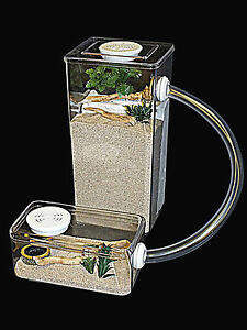 Tall Ant farm,Ant Housing,With Ant Arena,(no decor or nest included).
