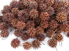 500 Sweet Gum Tree Spiked Gum Balls Nuts Seed Pods.  Crafts Hobbies Ornaments