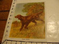VINTAGE DOG PRINT----IRISH SETTER