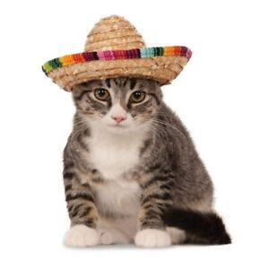Cute Mexican rainbow colours cat, dog funny pets hat
