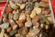 50  lb Lot of 2 - 3 inch Natural River and Mountain Rock For Landscaping Garden