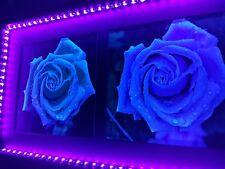 Photo Frame Roses with UV LED lights