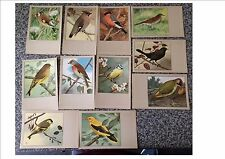 Sluis Bird Foods Vintage Post Cards Sluis Post Cards Cage Bird post card