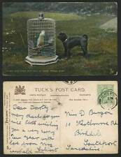 Raphael Tuck & Sons Collectable Bird Postcards