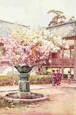 A4 Photo Du Cane Ella 1874 1943 Cherry blossom at Chion in Temple Flowers & Gard