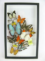 Einmalig wunderschöner Strauß mit echten Schmetterlingen Schaukasten Art 3D 09