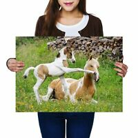 A2 - Horse & Foal Horses Playing Poster 59.4X42cm280gsm #3946