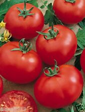 "Seeds ""Siberian precocious"" tomato (10 seeds) Lot of 1 pcs"