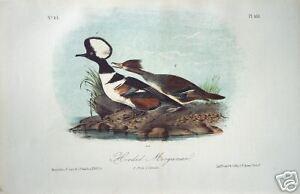 """John James Audubon: """"Hooded Merganser"""" Original Litho."""