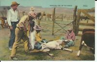 Branding Time on the Ranch Cowboys Rodeo Western Lampasas Texas Linen Postcard