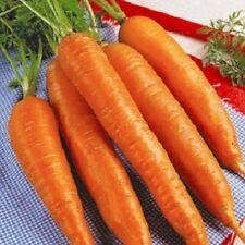Carrot KOROLEVA OSENI Seeds Queen of Autumn carrots seeds non gmo Ukraine 1 g