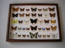 More details for a collection of 39 a1 british butterflies in a watkins & doncaster wall frame
