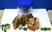 Feller Stone - Petrified Wood - Aquascaping Rock - 500g+