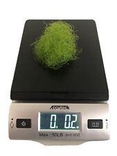 New listing Chaeto Macro Algae .2 Oz | 1/4 cup Chaetomorpha Refugium Live Copepods Amphipods