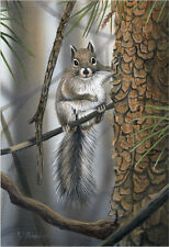 """""""Hanging Out"""" Gray Squirrel 14x19 Paper Print by Robert Metropulos"""