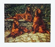 More details for irish red setter dog fine art limited edition print