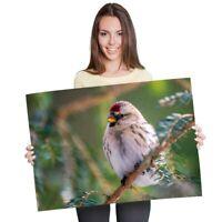 A1 - Redpoll Redcap Bird Birds Nature Poster 60X90cm180gsm Print #24098