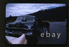 1950s 35mm red Kodachrome photo slide Chrysler Car & animals Black Hills SD