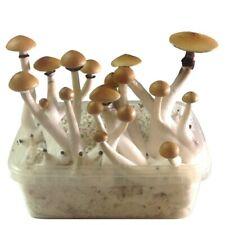 Magic Grow kit Mushrooms