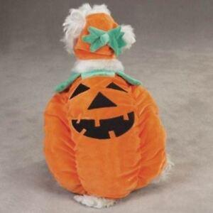Orange Pumpkin Pooch Dog Costume By Zack and Zoey Smaller Sizes Unisex