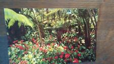 VINTAGE BEAUTIFUL POST CARD RED ANTHURIUMS HAWAII'S STATE FLOWER