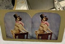 1900s Stereograph/view Card #86 English Bulldog Standing Top Hat Pink Cravat