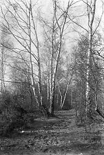 1910s WIMBLEDON COMMON #1 Antique Photographic Glass Negative (Woodland London)