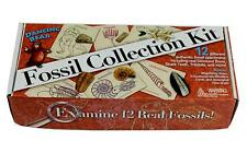 Fossil Collection Set, 12 pcs: Trilobite, Dinosaur Bone, Shark Tooth, Coprolit